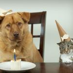 Free Birthday Meals - List of Restaurants